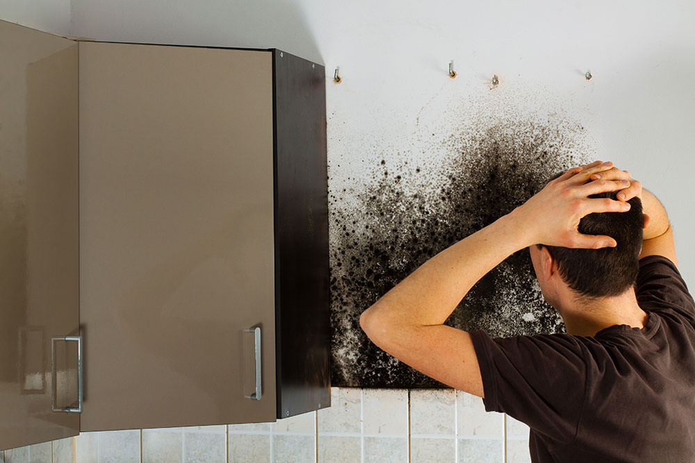 How To Deal With Mold On Your Al Property
