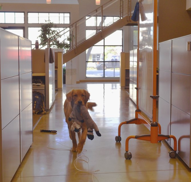 buster dog in office